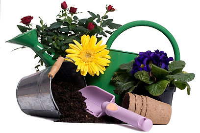 Master Gardener : University of Minnesota Extension